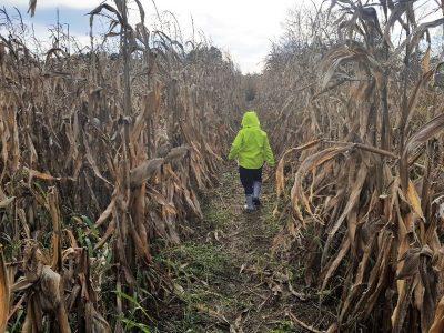 Kukuruzni labirint u koljevci naivne umjetnosti u Hlebine