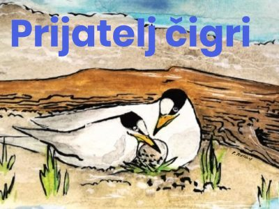 Be a friend of little terns!